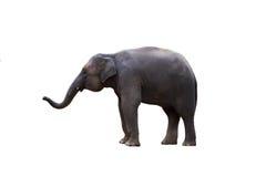Elefante de Tailândia no fundo branco Fotografia de Stock Royalty Free