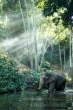 Elefante de Tailandia Fotografía de archivo