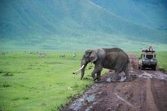 Elefante de toro grande que cruza el camino cerca del vehículo del safari Foto de archivo