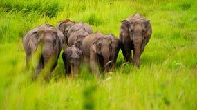 Elefante de Wilds Fotografia de Stock Royalty Free