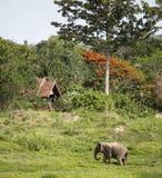 Elefante debajo de árboles anaranjados y verdes enormes foto de archivo libre de regalías