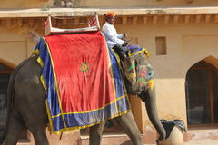 Elefante decorado com testes padrões pintados tradicionais Imagens de Stock Royalty Free