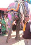 Elefante decorado que anda na estrada contra direitos dos animais Imagens de Stock Royalty Free