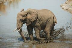 Elefante del baño de fango Imagenes de archivo