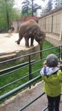 Elefante del baile Imágenes de archivo libres de regalías