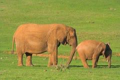 Elefante del bambino & della madre Fotografie Stock Libere da Diritti