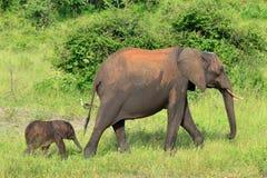 Un elefante sveglio del giorno scorso Immagini Stock