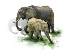 Elefante del bambino e della madre, isolato Fotografie Stock