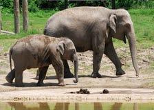 Elefante del bambino e la sua mamma al giardino zoologico Fotografia Stock