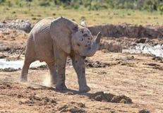 Elefante del bebé Fotos de archivo