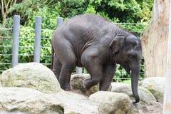 Elefante del bebé en rocas imágenes de archivo libres de regalías