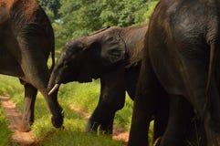 Elefante del bebé que juega en la arena Fotografía de archivo libre de regalías