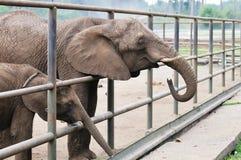 Elefante del bebé y de la madre Imagenes de archivo
