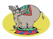 Elefante del circo Fotos de archivo libres de regalías