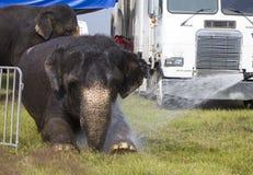 Elefante del circo que consigue un baño Imagenes de archivo