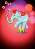 Elefante del circo que equilibra en soporte Fotografía de archivo libre de regalías