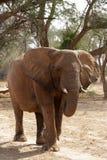 Elefante del deserto immagini stock libere da diritti