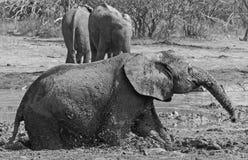 Elefante del fango a waterhole Fotografia Stock Libera da Diritti