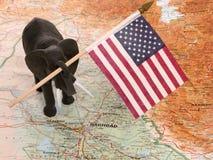 Elefante del giocattolo con la bandierina degli Stati Uniti nell'Iraq immagine stock libera da diritti