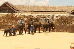 Elefante del grupo de la demostración de Editorial-1st en el piso en el parque zoológico Imágenes de archivo libres de regalías