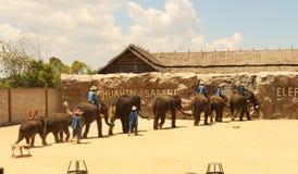 Elefante del gruppo di Editoriale-manifestazione sul pavimento nello zoo fotografia stock libera da diritti