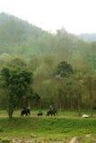 Elefante del montar a caballo con el fondo de la montaña Fotos de archivo libres de regalías