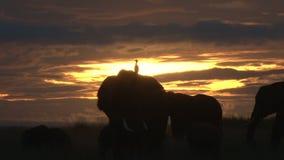 Elefante del montar a caballo de la garceta en la oscuridad metrajes