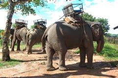 Elefante del montar a caballo en Tailandia fotografía de archivo libre de regalías