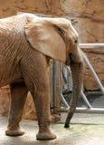 Elefante del parque en el parque zoológico de Mysore Fotos de archivo libres de regalías