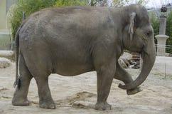 Elefante del parque en el parque zoológico de Mysore Foto de archivo