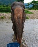 Elefante del río Foto de archivo