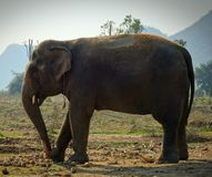 Elefante del rescate fotos de archivo libres de regalías