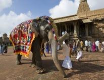 Elefante del tempiale - Thanjavur - India Fotografia Stock Libera da Diritti