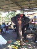 Elefante del tempio fotografie stock libere da diritti