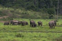 Elefante dell'Asia in Tailandia Fotografia Stock Libera da Diritti