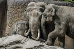 Elefante della famiglia su una roccia Immagine Stock