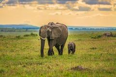 Elefante della madre con un bambino Fotografia Stock Libera da Diritti