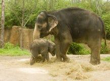 Elefante della madre e del bambino Immagine Stock Libera da Diritti