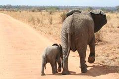 Elefante della madre e del bambino Fotografie Stock Libere da Diritti