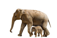Elefante della madre e del bambino Fotografia Stock Libera da Diritti