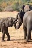 Elefante della madre e giovani uno Immagini Stock Libere da Diritti