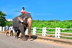 Elefante dello Sri Lanka fotografia stock
