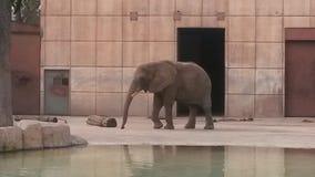 Elefante dello zoo Fotografie Stock