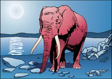 Elefante dentellare Fotografia Stock