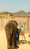 Elefante di Editoriale-manifestazione che attinge il pavimento nello zoo immagini stock libere da diritti