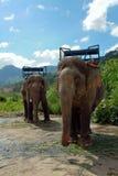 Elefante di lavoro Fotografie Stock