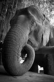 Elefante di salvataggio Fotografia Stock