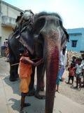 Elefante do animal de estimação fotografia de stock royalty free