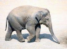 Elefante do bebê Imagem de Stock Royalty Free