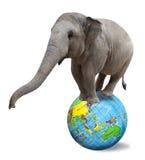 Elefante do circo fotografia de stock royalty free
